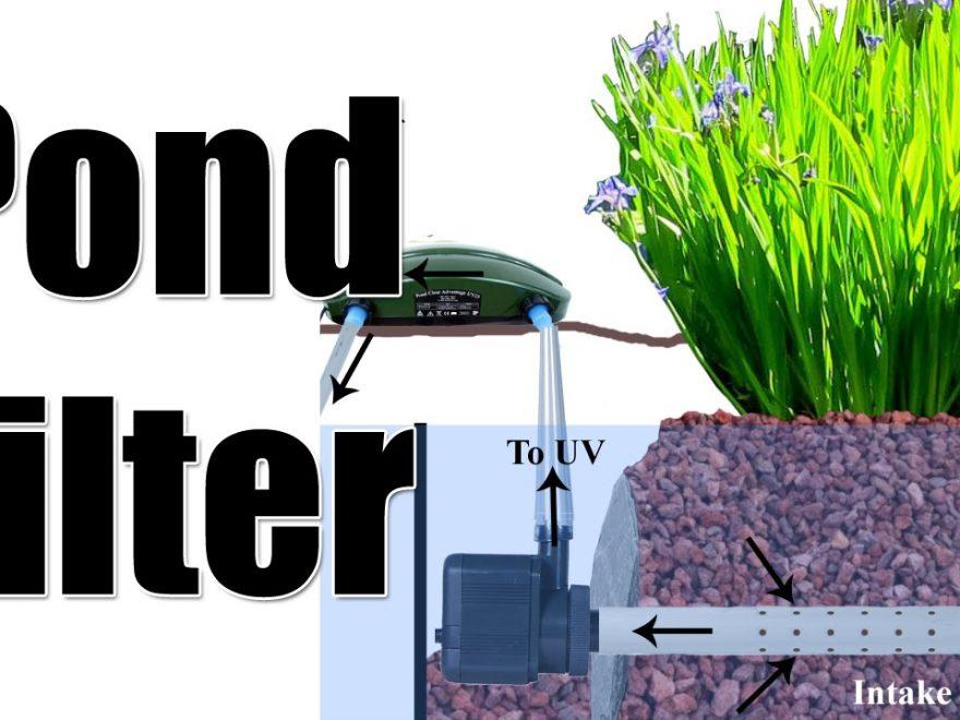 Pond tips veggie bog plant filter ara mental health for Pond veggie filter